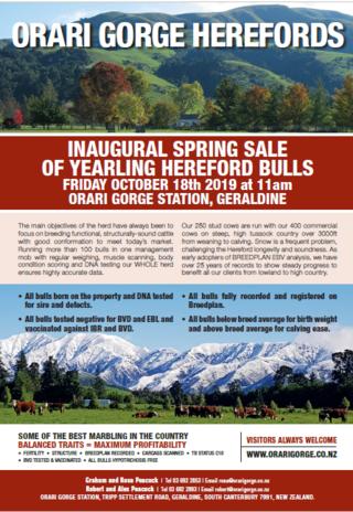 ORARI GORGE HEREFORDS YEARLING BULL SALE - GERALDINE