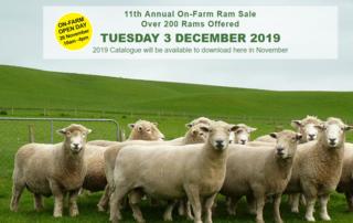 MERRYDOWNS ROMNEY & SOUTHDOWN 11TH ANNUAL ON FARM RAM SALE - A/C: BA & SC ROBERTSON