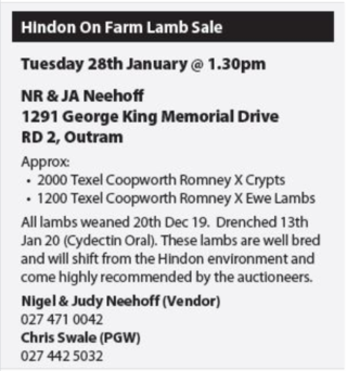 HINDON LAMB SALE - OUTRAM