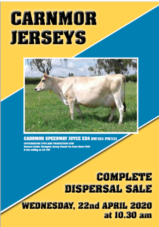COMPLETE DISPERSAL SALE OF THE CARNMOR JERSEY STUD - TE AWAMUTU