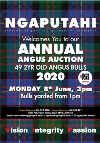 NGAPUTAHI ANGUS BULL SALE - POHANGINA