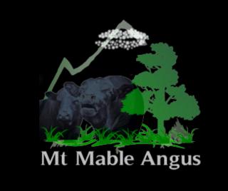 MT MABLE ANGUS BULL SALE