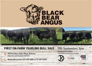 BLACK BEAR ANGUS YEARLING BULL SALE - ROTORUA