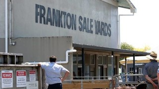 FRANKTON SHEEP, CATTLE & CALVES SALE