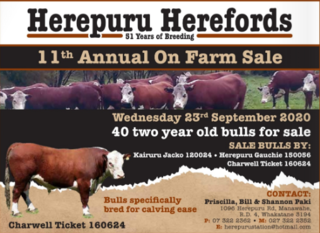 HEREPERU STATION HEREFORD BULL SALE