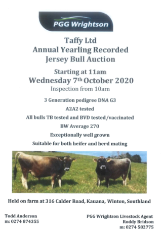 TAFFY LTD RECORDED JERSEY YEARLING BULL SALE - ON FARM