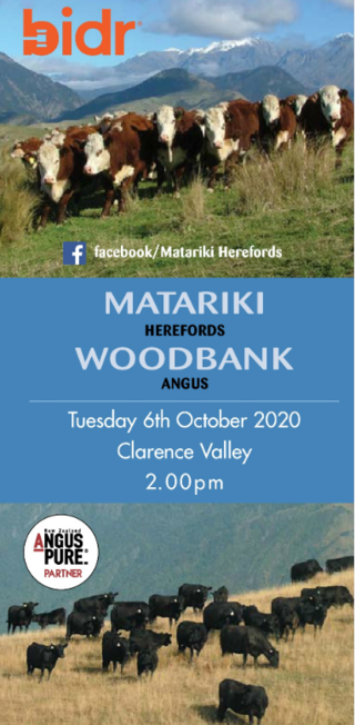 MATARIKI HEREFORD & WOODBANK ANGUS YEARLING SALE