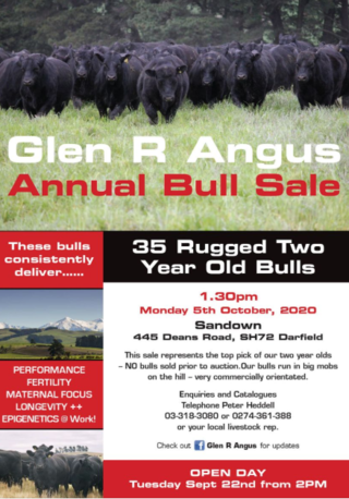 GLEN R ANGUS BULL SALE