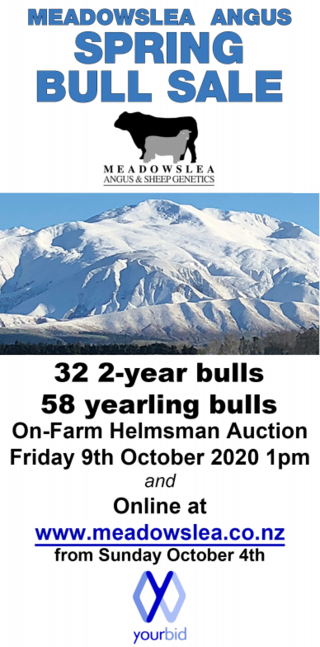 MEADOWSLEA ANGUS SPRING BULL SALE