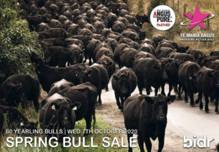 TE MANIA ANGUS YEARLING BULL SALE