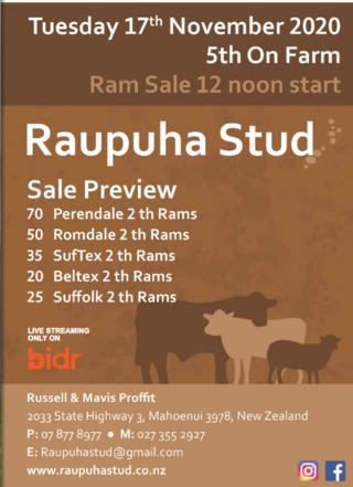 RAUPUHA PERENDALE / ROMDALE / SUFFOLK / SUFTEX RAM  SALE