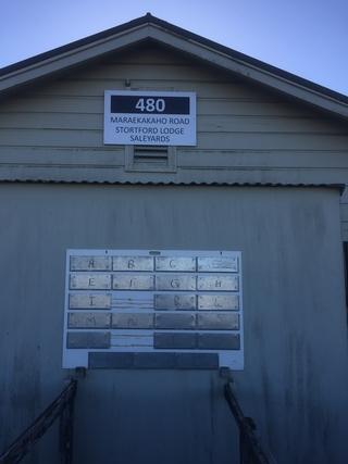 KILORAN POLLED DORSET RAM SALE - STORTFORD LODGE SALEYARDS