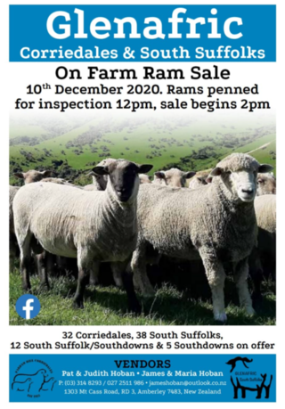 GLENAFFRIC SOUTH SUFFOLK & CORRIEDALE RAM SALE