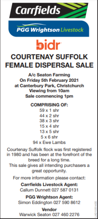 COURTENAY SUFFOLK FEMALE DISPERSAL SALE