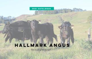 HALLMARK ANGUS BULL SALE - TUTIRA
