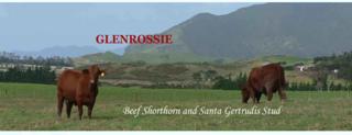 GLENROSSIE SHORTHORN & SANTA GERTRUDIS BULL SALE - WHANGAREI HEADS