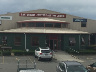 CANTERBURY PARK ALL STOCK EXCL. STORE CATTLE