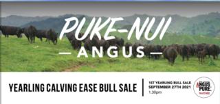 PUKE-NUI ANGUS YEARLING BULL SALE