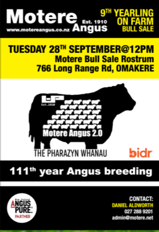 MOTERE ANGUS YEARLING BULL SALE