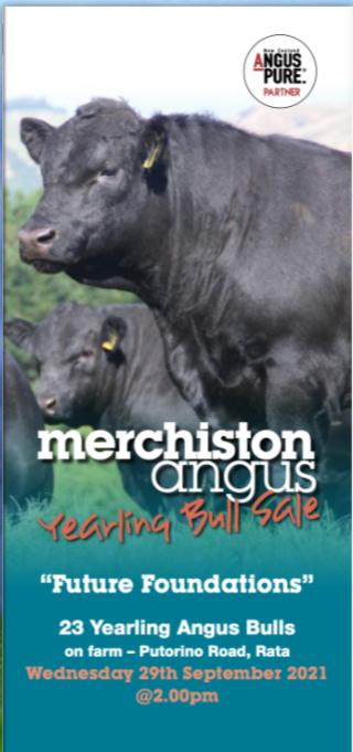 MERCHISTON ANGUS YEARLING BULL SALE