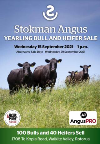 STOKMAN ANGUS YEARLING BULL AND HEIFER SALE