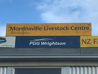 COMPLETE PUREBRED JERSEY DISPERSAL SALE - MORRINSVILLE SALEYARDS (Covid Level 2 Selling Protocols)