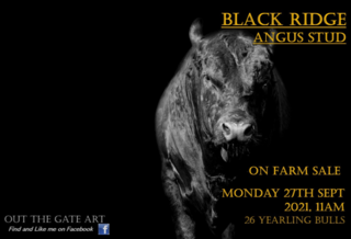 BLACK RIDGE ANGUS BULL SALE
