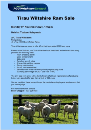 TIRAU WILTSHIRES, SHEDDING SHEEP RAM SALE - TUAKAU SALEYARDS (Covid Level 3 Selling Protocols)
