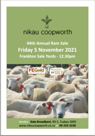 NIKAU COOPWORTH'S RAM SALE - FRANKTON SALEYARDS (Covid Level 3 Selling Protocols)