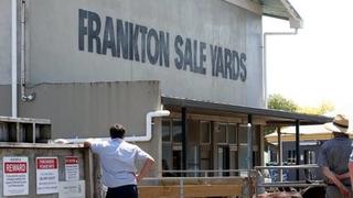 FRANKTON DAIRY BEEF SALE (Covid Level 3 Selling Protocols)