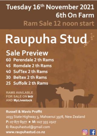 RAUPUHA PERENDALE/ROMDALE/SUFFOLK/SUFTEX RAM SALE