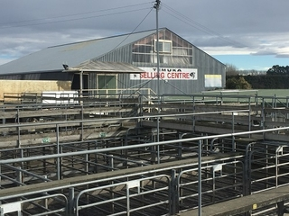 TEMUKA STORE CATTLE SALE (Covid Level 2 Selling Protocols)