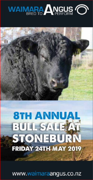 WAIMARA ANGUS BULL SALE (AFTER STONEBURN HEREFORD SALE)  STONEBURN - EAST OTAGO