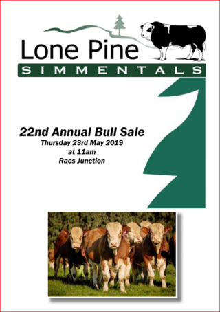 LONE PINE SIMMENTAL BULL SALE - RAES JUNCTION