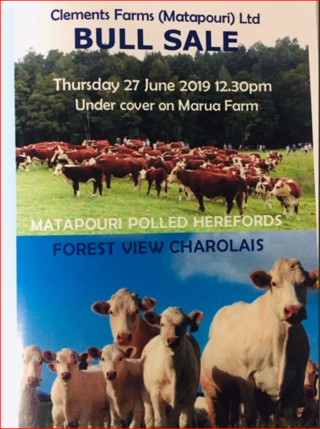 CLEMENTS FARMS (MATAPOURI LTD) BULL SALE - WHANGAREI