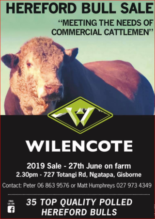 WILENCOTE HEREFORD BULL SALE - GISBORNE