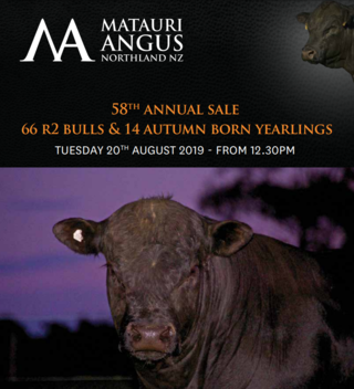 MATAURI ANGUS 58TH ANNUAL BULL SALE - KAEO
