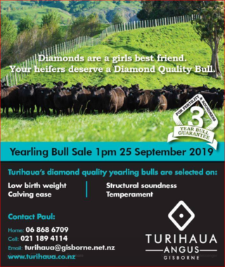 TURIHAUA ANGUS YEARLING & 2 YEAR OLD BULL SALE