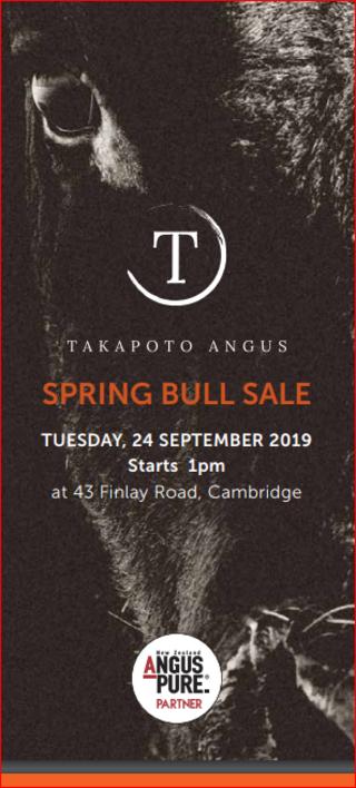 TAKAPOTO YEARLING ANGUS BULL SALE - CAMBRIDGE